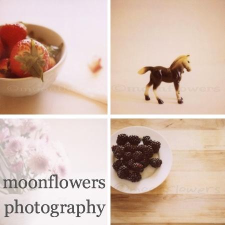 moonflowersphotography