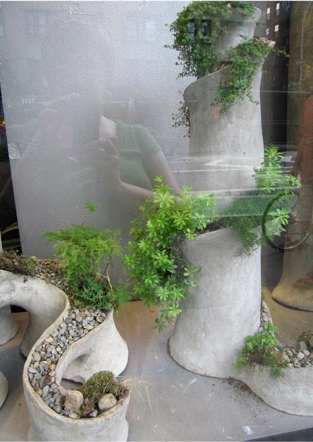 succulent statutes 2