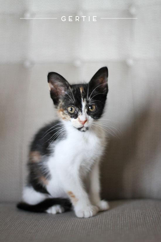 gertie-the-cat