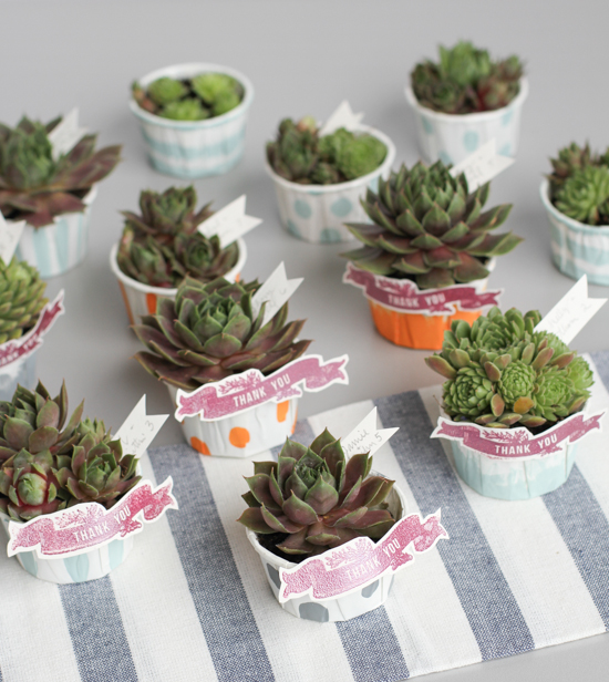DIY // Succulent Wedding Favors
