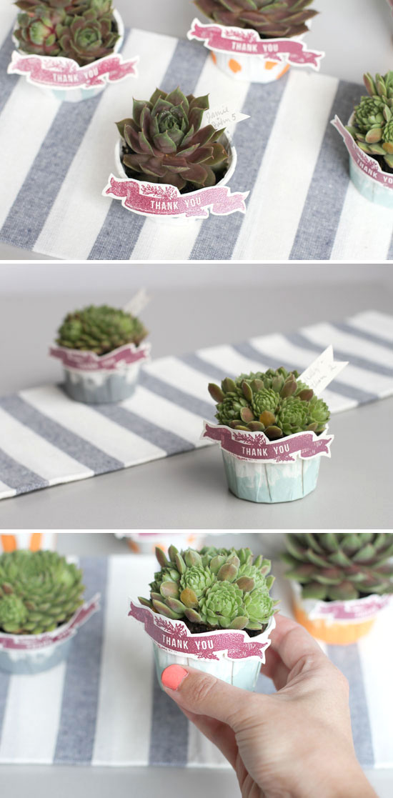 DIY // Painted Baking Cups + Succulents Gift & Make This: Painted Bakeru0027s Cup Succulent Gift - Paper and Stitch