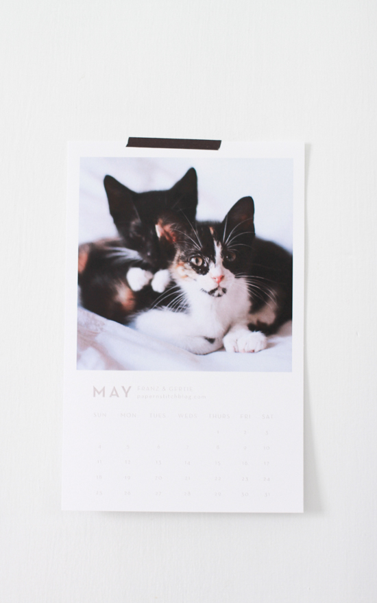 franz & Gertie // bloggers love cats