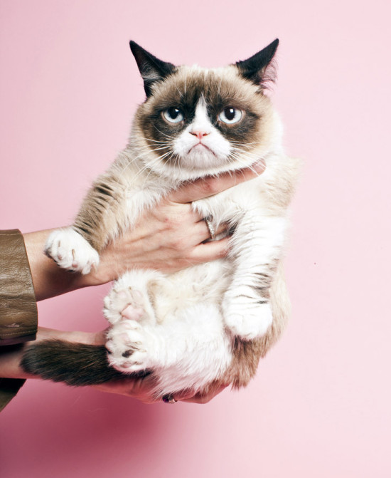 Even grumpy cat likes pink