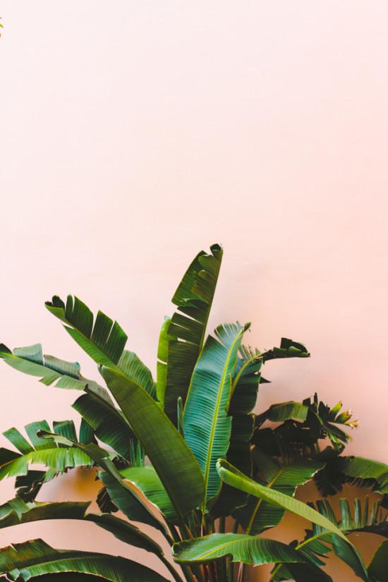 Palms + Pink Wall