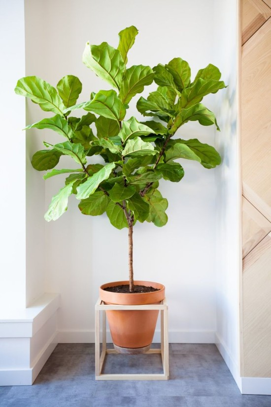 9 reasons why living with plants is kind of the best