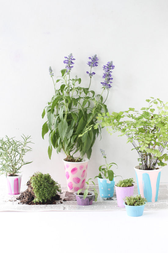 DIY // Easiest Indoor Herb Garden