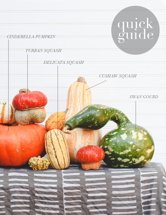 Quick Guide to Gourds, Squash, and Pumpkins