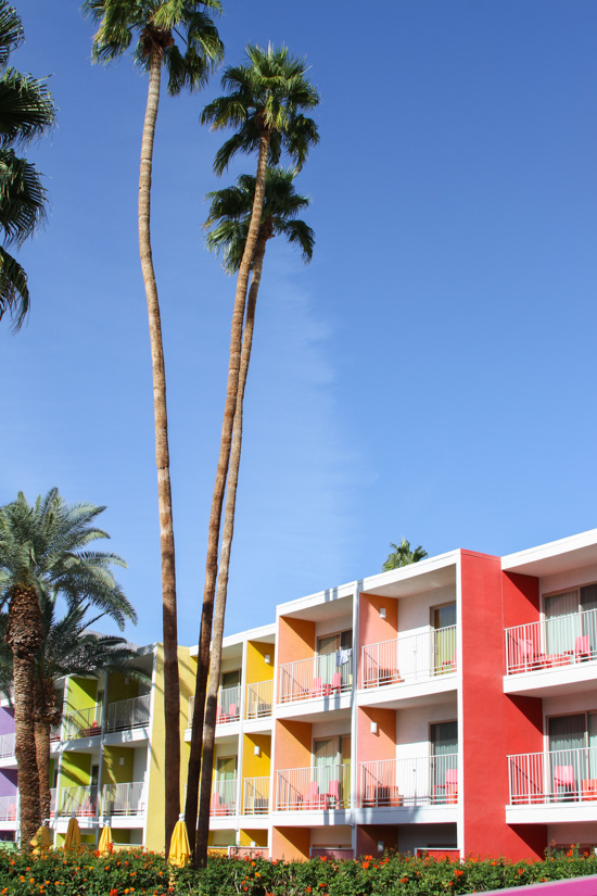 Palm Springs // The Saguaro