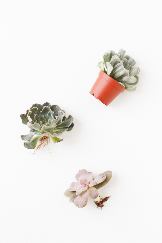 DIY // How to Add Store-Bought Succulents to Any Bouquet on a Budget