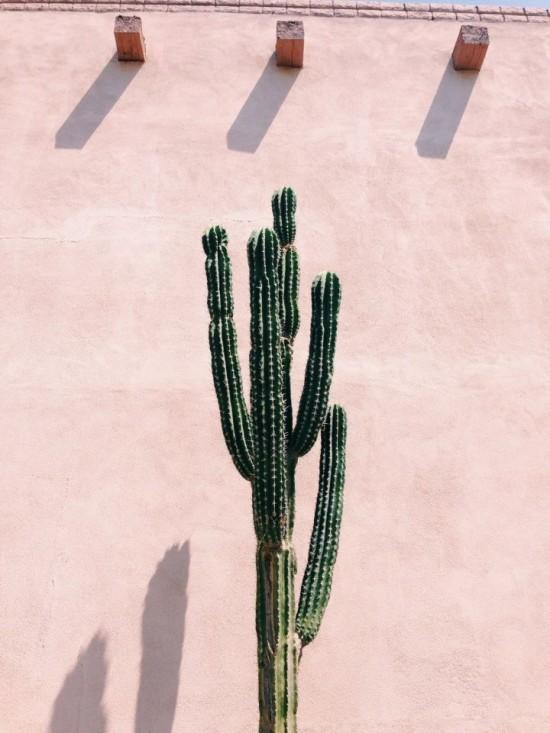 Super tall cactus