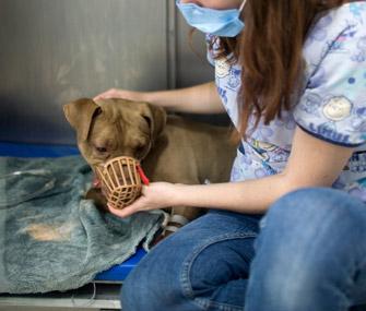 5 Reasons Veterinarians Muzzle Dogs
