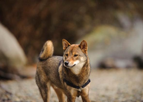 Tips To Help You Manage Dog Shedding Season