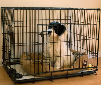 The Right Crate For Your New Puppy