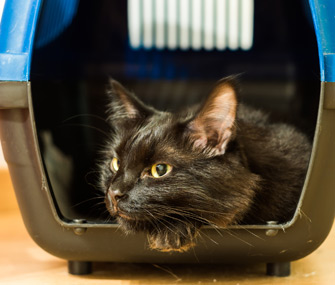 Help Your Cat Stay Calm at the Vet by Managing Your Own Stress
