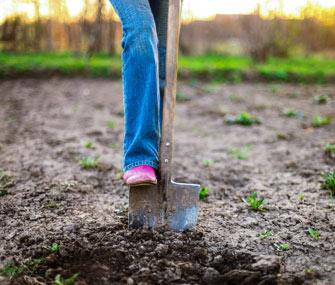 Shoveling a garden