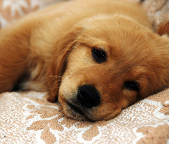 Gastrointestinal Parasites In Pets Preventing And
