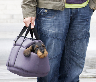 How Can I Teach My Little Dog To Like His Carrier