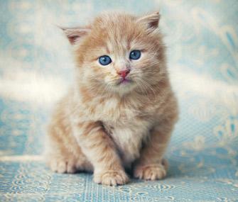 Image result for kitten named Kitty
