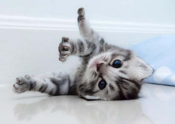 Image result for kitten named Nala