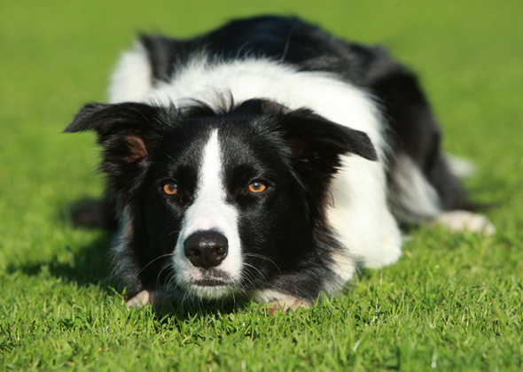 10 High Maintenance Dog Breeds