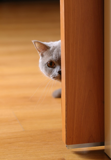 How Not To Raise A Fraidy Cat And What To Do If You Live