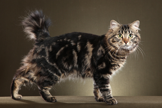 6 Cat Breeds Who Love to Play With Water