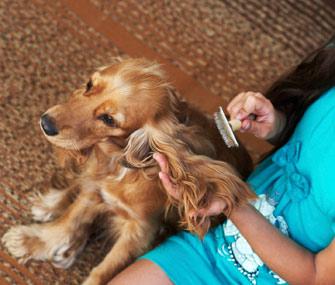 Cat And Dog Shedding 5 Ways To Keep Pet Hair Under Control