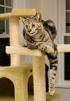 How Can I Teach My Cat To Love Her Cat Tree