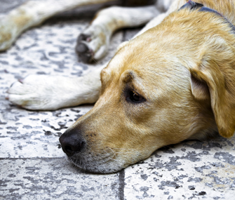 Natural Cures For Dog Incontinence