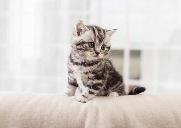 Cute Kitten Names: The Most Popular Male And Female Kitten