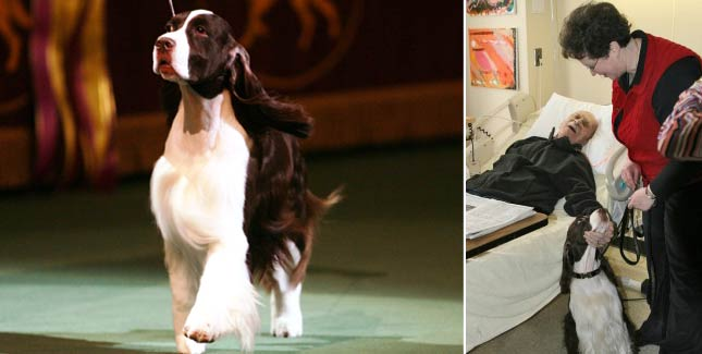 Past Westminster Best In Show Dogs Where Are They Now