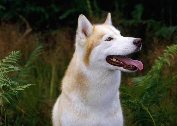The 12 Most Talkative Dog Breeds