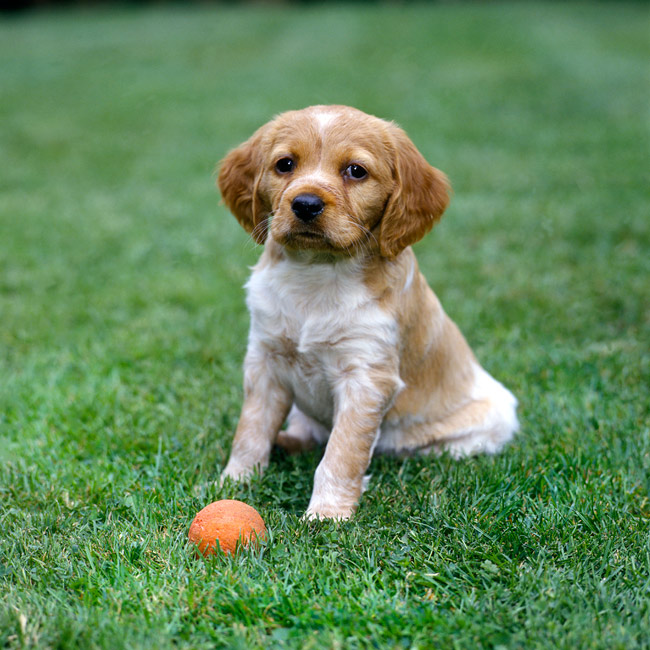 15 Most Playful Dog Breeds Photo Gallery