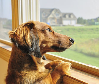 Alleviate Your Dog S Separation Anxiety