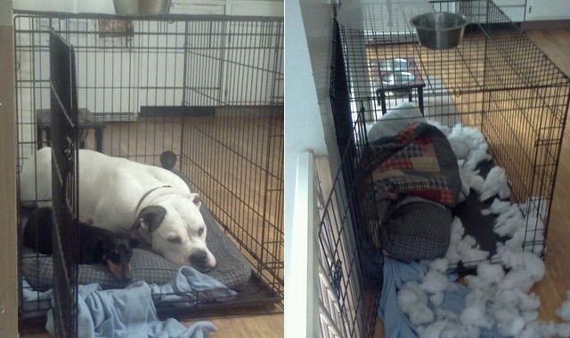 The Worst Things Dogs Have Ever Done While Home Alone