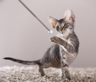 cat training