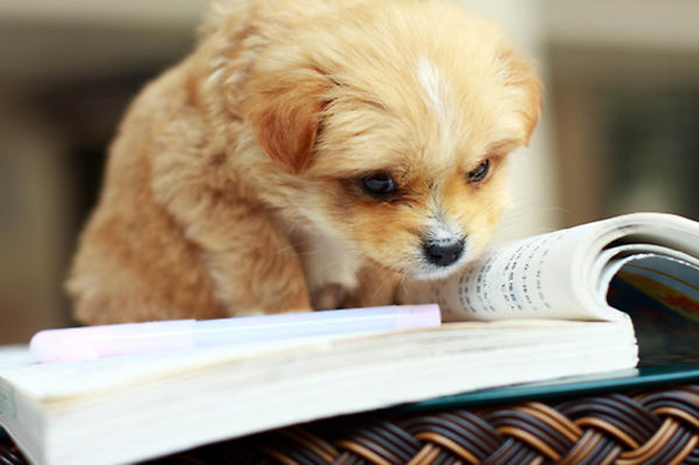 cute stuff emergency rescue rough pet studying reading puppy dog dogs things puppies pets books animals pup read cutest funny