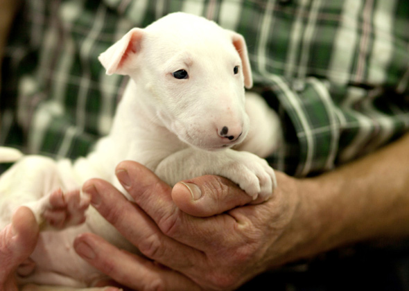 bull terrier names most trendy boy and girl dog names of 2014 9772