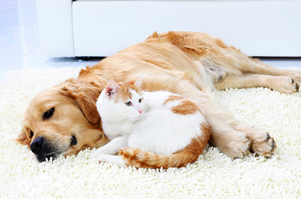 Who S Happier Indoor Cats And Dogs Or Pets Who Roam Free
