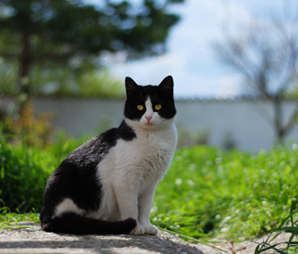 How Can I Keep the Neighbor's Cat Out of My Yard?