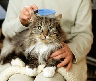 Flea Control A Pet Owners Guide To Flea Control