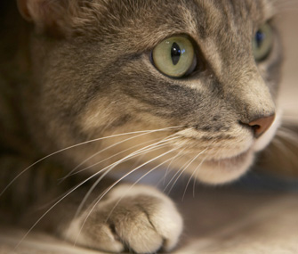 Pet Facts: What Are Whiskers For?