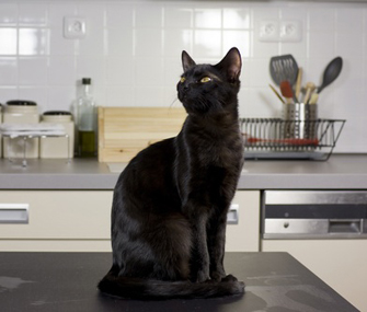 How To Keep Cats Off The Kitchen Counters And Table