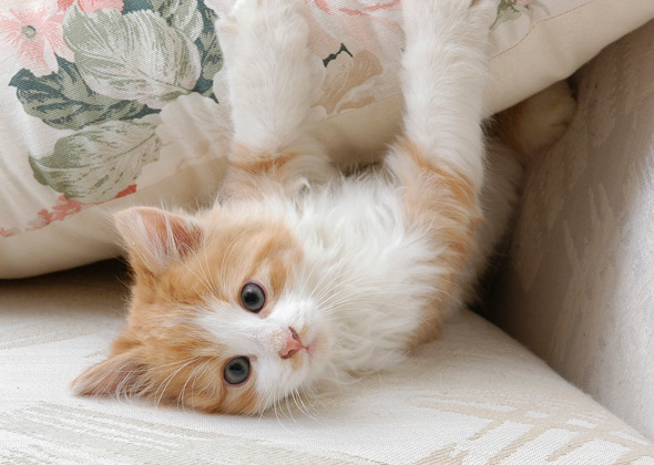 10 Most Popular Kitten Names