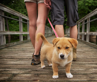 Dating site for dog lovers usa