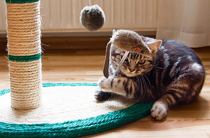 5 Secrets To Keeping Your Indoor Cat Happy