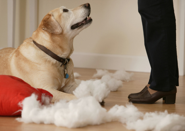 Are You Stressing Your Dog Out?