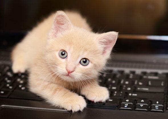 Image result for kitten named Callie