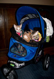 The Things We Do For Love Quot My Cats Have Their Own Strollers Quot
