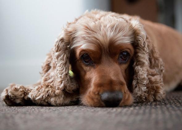 Most Popular Dog Names For Medium Dog Breeds